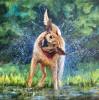 Splash #  by Sandra Stevens