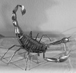 Scorpio #  by Ken Law