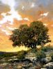Bluebonnet Sundown #  by Gary Jack Thornton