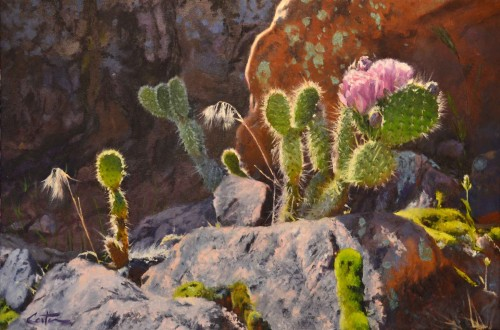 Cactus in Bloom by