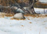 Overnight Snow #  by Mark Stewart