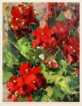 Geraniums #  by Kaye Franklin