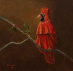 The Cardinal #  by Sandra Stevens