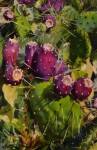 Fruit of the Prickly Pear #  by Mitch Caster